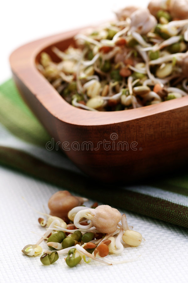 Germ buds stock photography