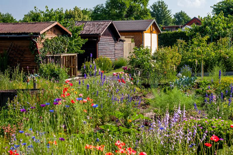 German allotment garden in a garden area. With flowers an wooden houses stock photos