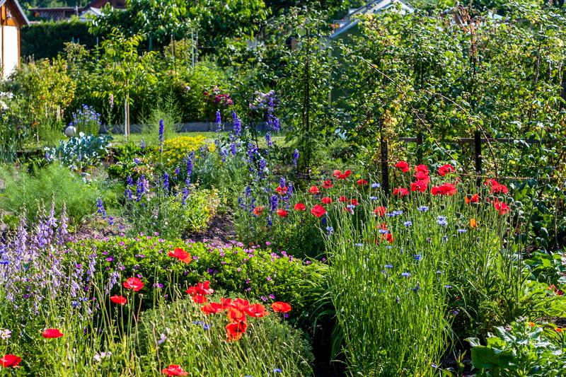 German allotment garden in a garden area. With flowers stock images