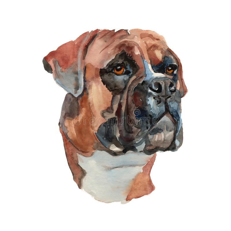 German boxer dog portrait vector illustration