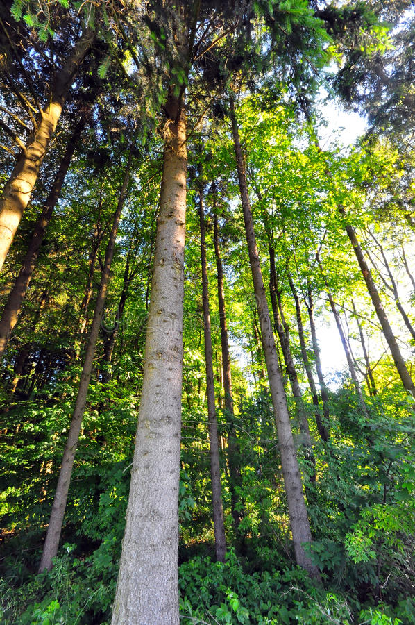 German Forest royalty free stock images