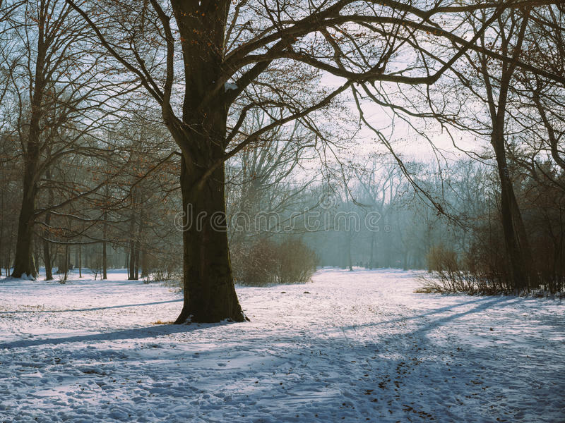 German Forest with snow and trees with still atmosphere Munich, stock photo