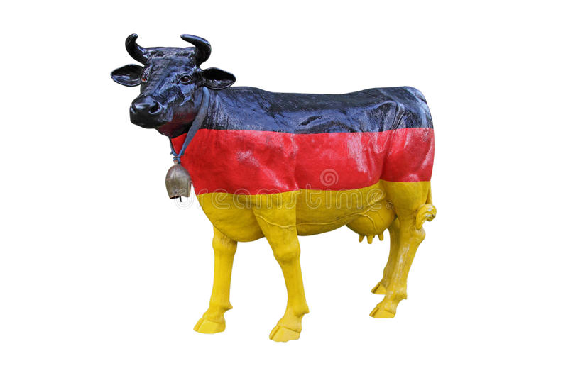German milk cow stock photo