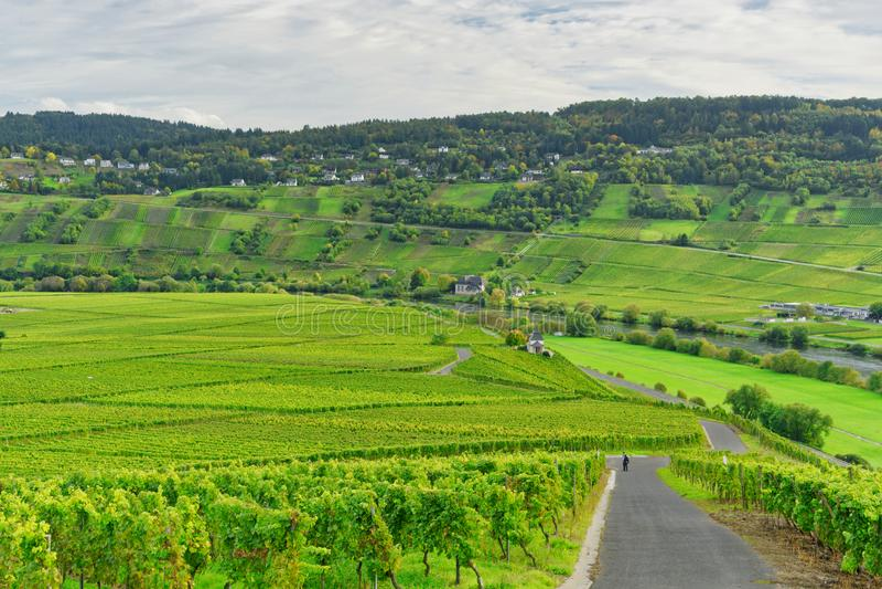 German Moselle vineyard stock image