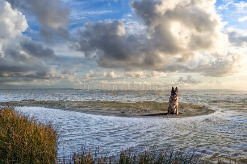 Download German Shepherd Royalty Free Stock Photos - Image: 28918448
