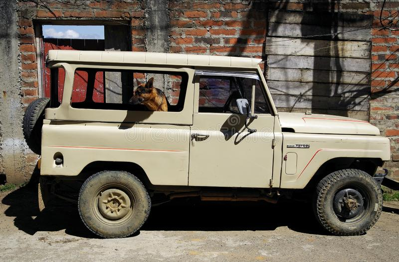 JARDIN, COLOMBIA, AUGUST 14, 2018: German Shepherd Dog in a vehicle parked on side of a street in Jardin town. royalty free stock image