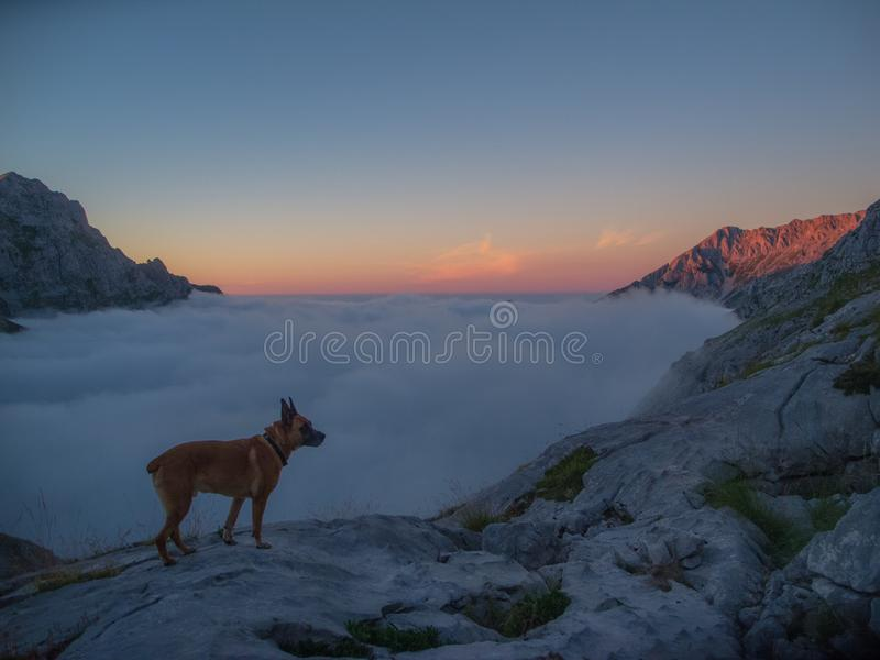 dog watching the sunset stock images