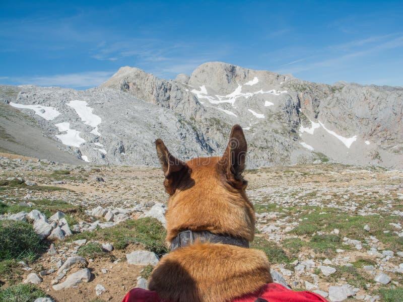 dog contemplating mountainous landscape royalty free stock photo