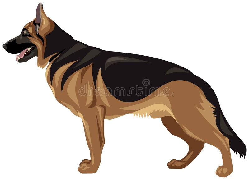 German shepherd dog breed color realistic vector illustration stock photos