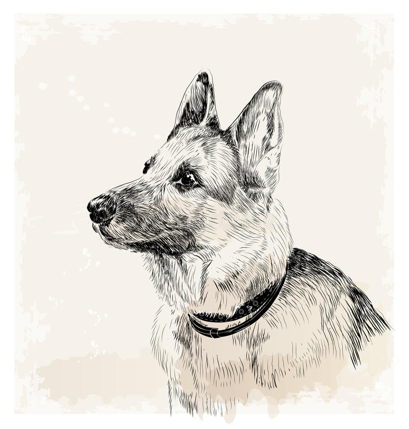 german shepherd dog royalty free illustration