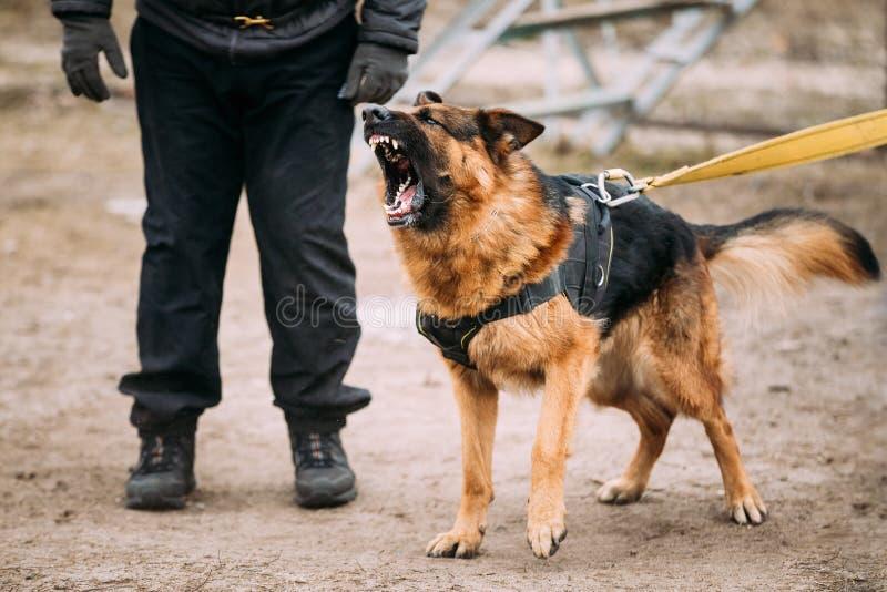 Danger Dog Barking