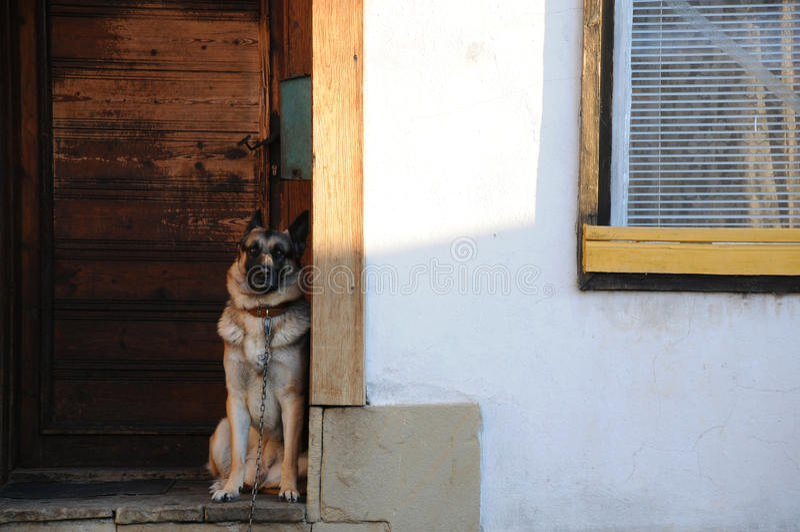 Download German Shepherd At The Door Stock Photo - Image of security, exterior: 22949056