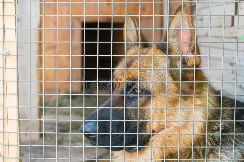 German shepherd is locked in a cage royalty free stock photos