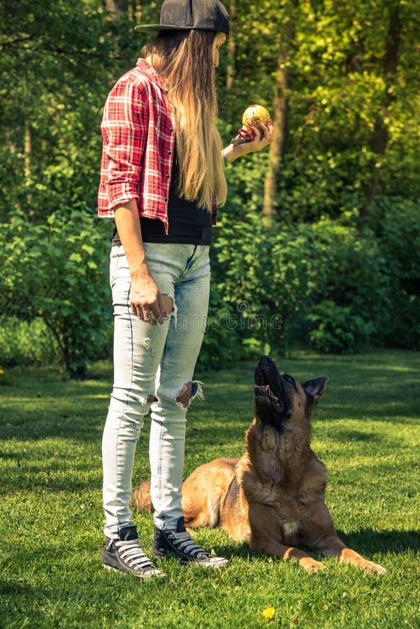 German shepherd obedience training by woman in garden.  stock photos
