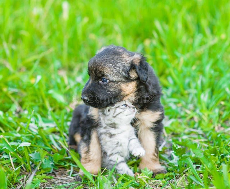 German shepherd puppy hugging tabby kitten on green grass.  stock image
