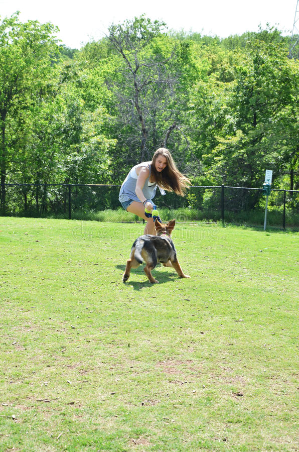 German Shepherd Puppy Play. Girl with dog at doggy park playing with toy royalty free stock photo