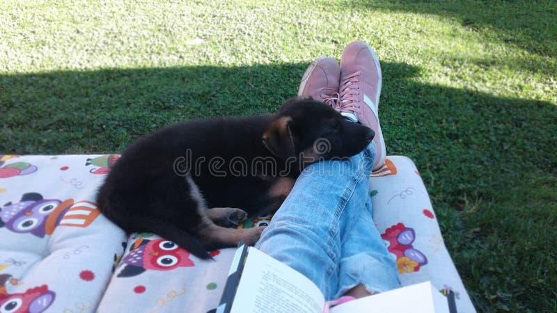 German shepherd puppy sleeping on the feet royalty free stock photography