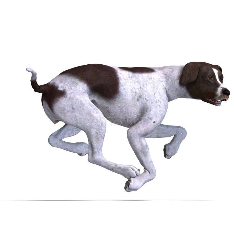 Download German Short Hair Dog stock illustration. Illustration of isolated - 15678082