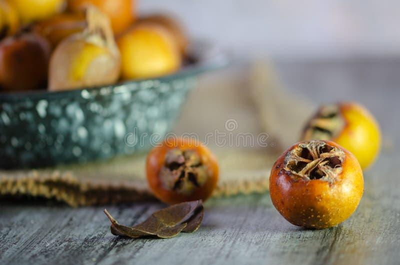 Germanica del Mespilus - también conocido como fruta del níspero fotografía de archivo