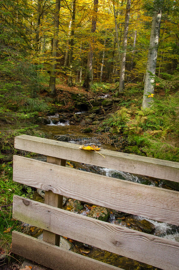 Germany, Bavarian Forest. Clean rivers in the Bavarian autumn forest stock photography