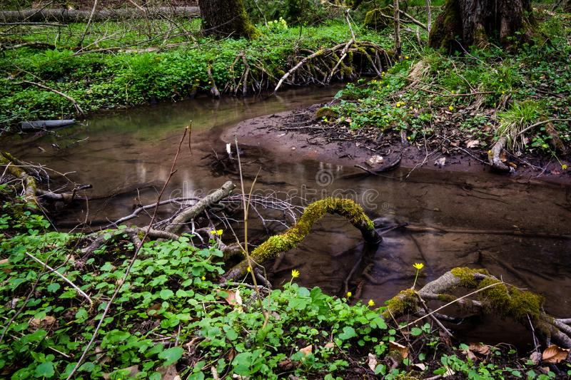 Water stream on meadow woods forest spring. Germany water stream on meadow woods forest tree stock photo