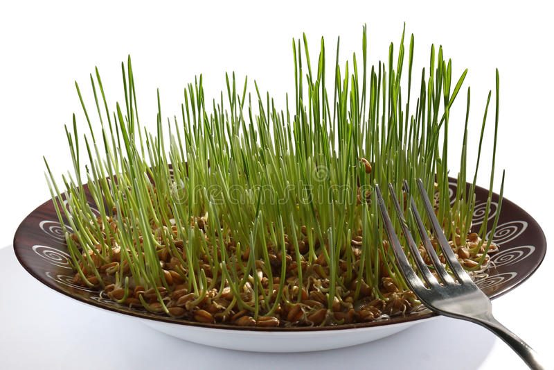 Germe de blé photo libre de droits