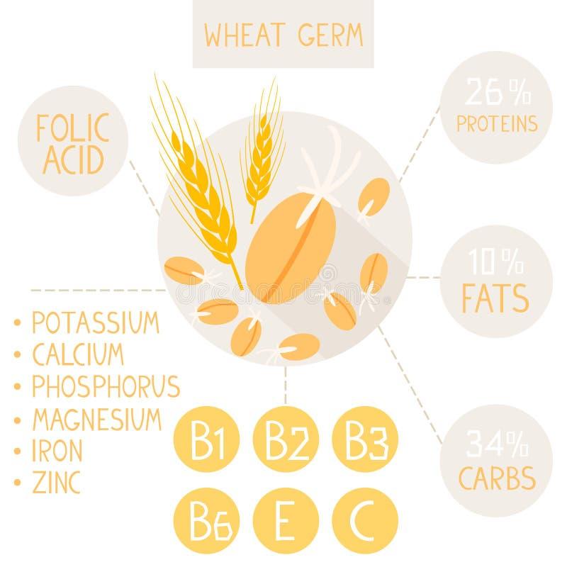 Germe de trigo ilustração do vetor