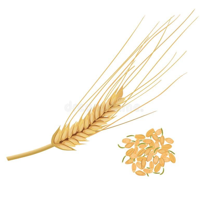 Germe de trigo, o núcleo de trigo nutritivo Isolado Grões germinadas ilustração royalty free