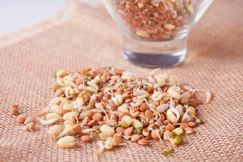 Germen de cereal brotado crudo para la comida sana en una servilleta marrón imagen de archivo libre de regalías