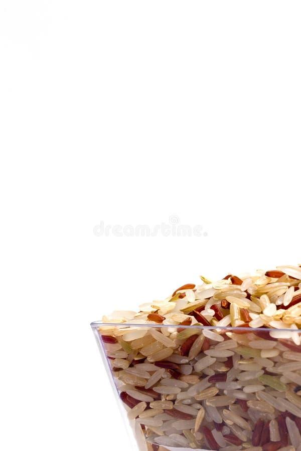 Germen del arroz fotografía de archivo libre de regalías