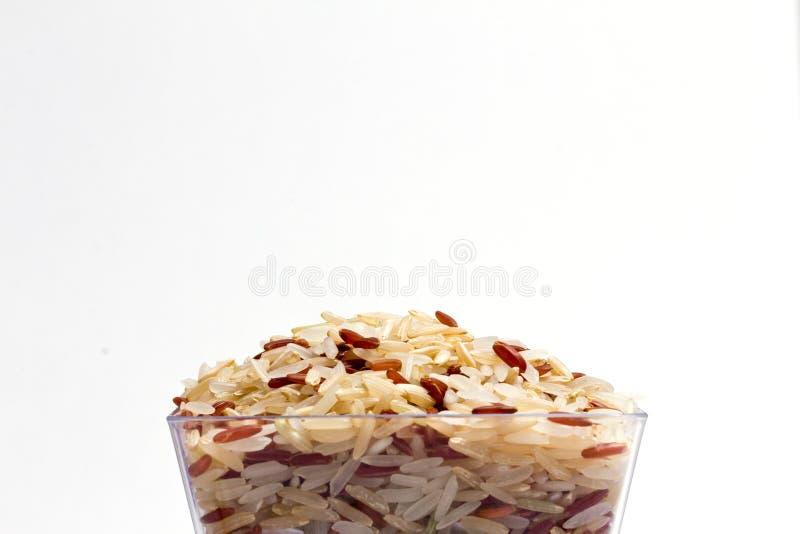 Germen del arroz imagen de archivo