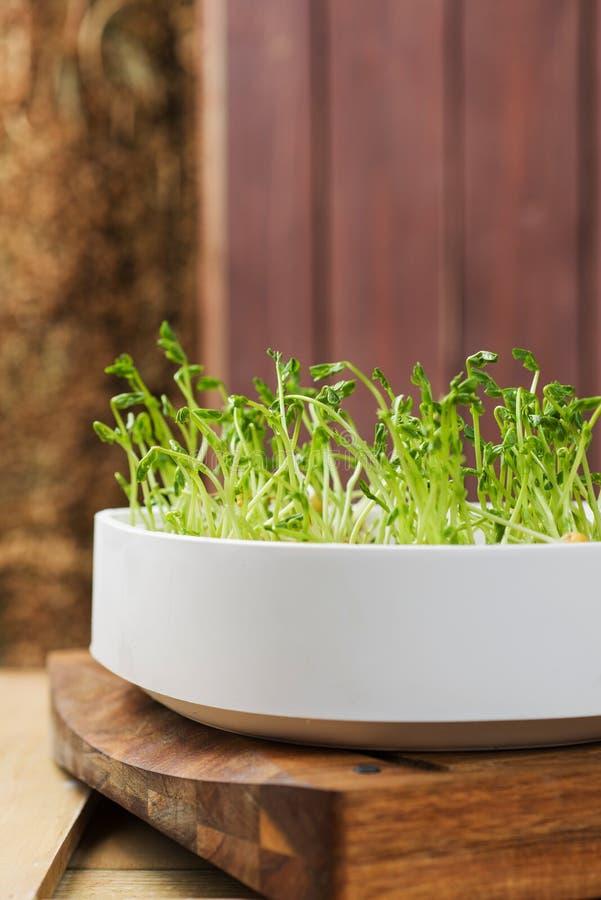 Download Germi di soia immagine stock. Immagine di coltivato, osservato - 30830223