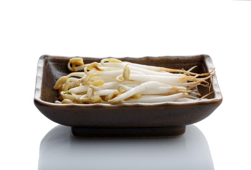 Germi di soia di Mung in una ciotola rettangolare ceramica marrone isolata su fondo bianco fotografia stock libera da diritti