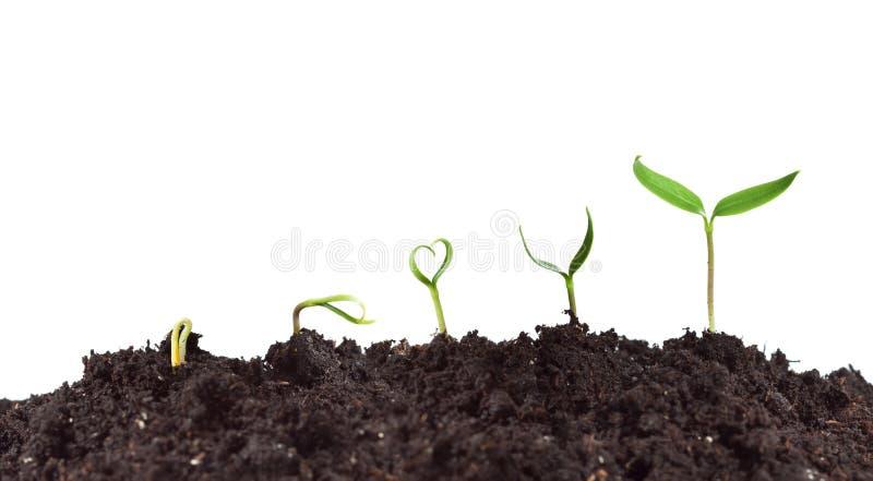 Germinação e crescimento da planta fotos de stock royalty free