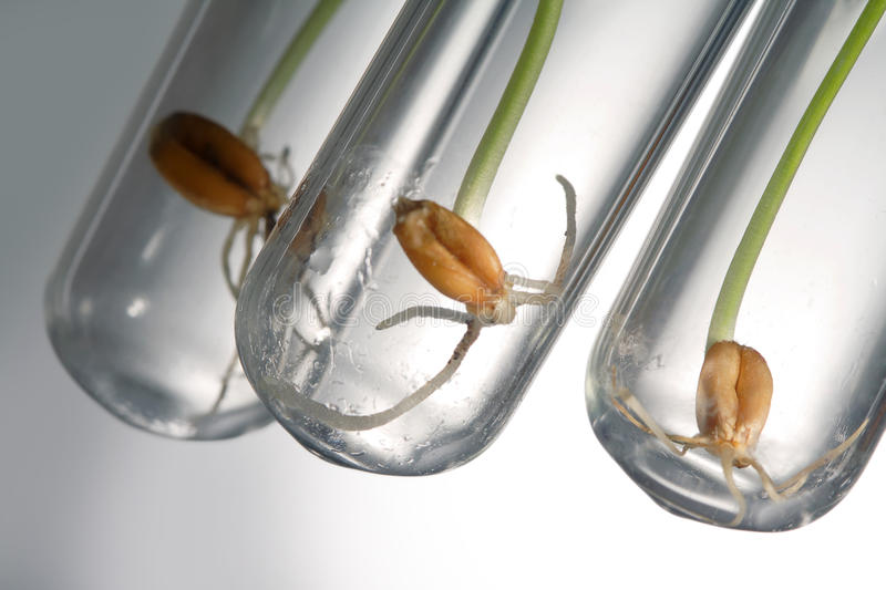 Germinate seed stock photography