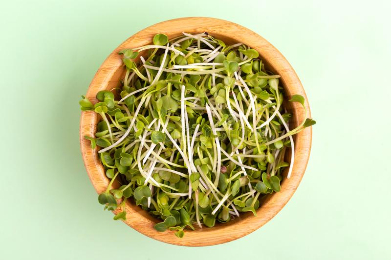 Germinated radish sprouts in wooden bowl on light green background stock images