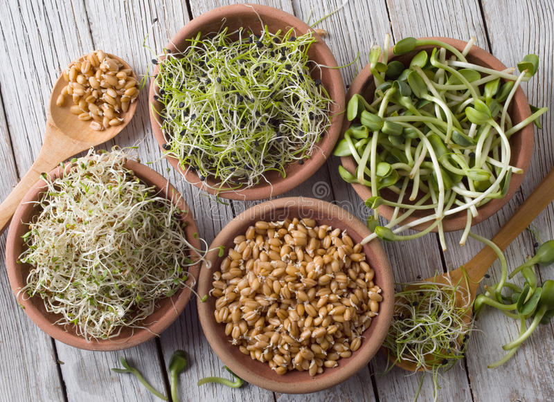 Germinated seeds royalty free stock image