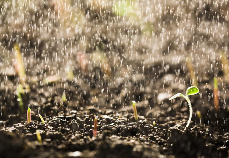 Germinating seed in agriculture royalty free stock images