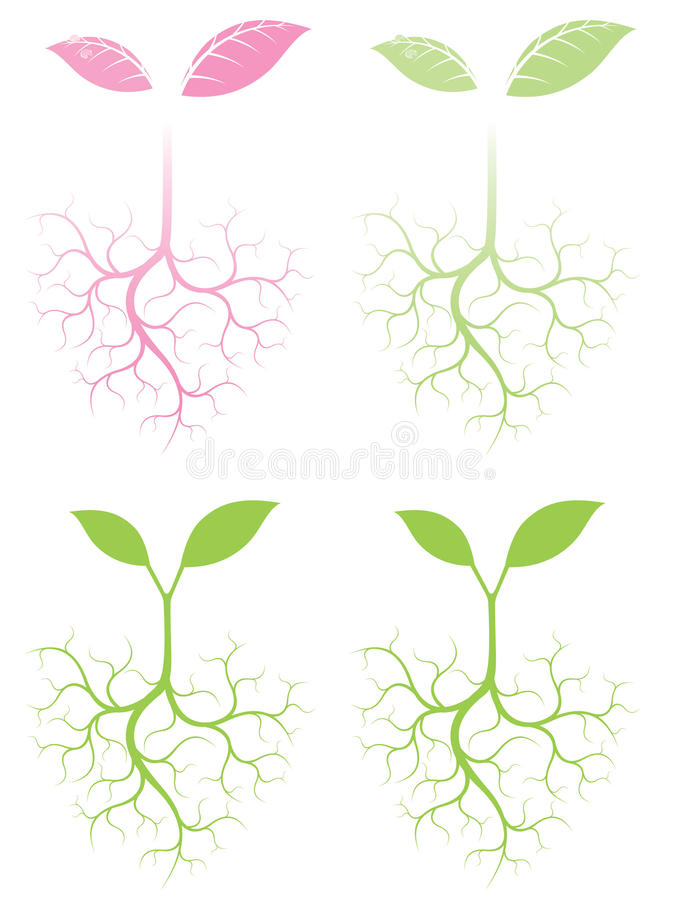 Germination royalty free illustration