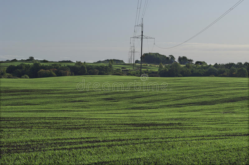 Download Germination Field And Electric Line. Stock Image - Image: 11651845