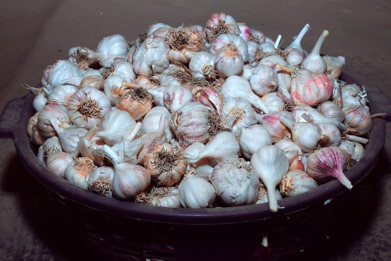 Germogli dell'aglio in grande piatto immagine stock libera da diritti