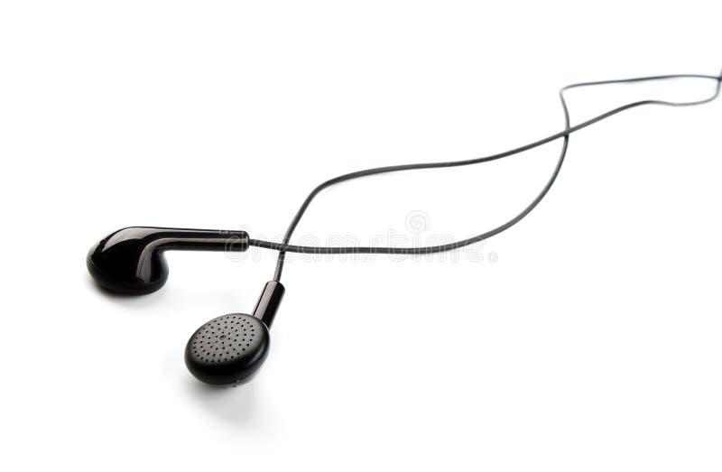 Germogli dell'orecchio immagine stock libera da diritti