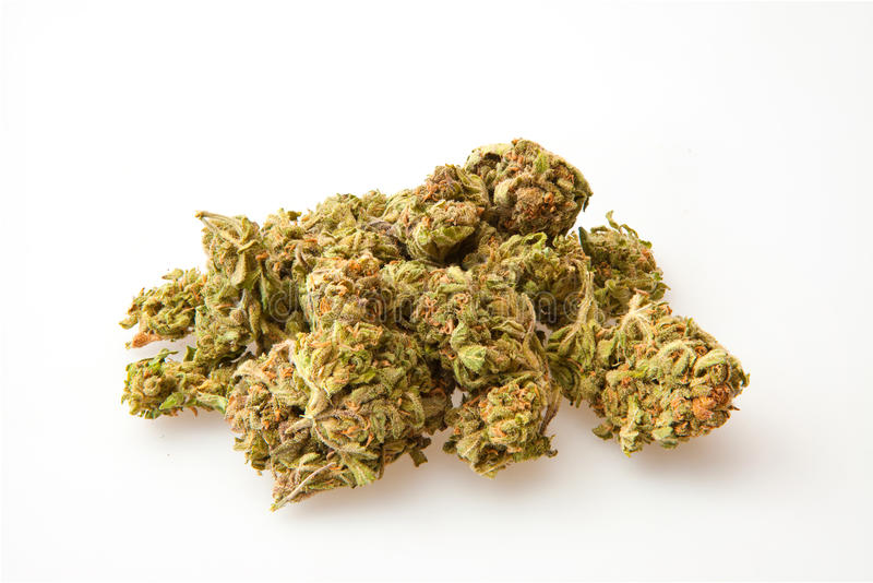 Germogli della marijuana immagini stock