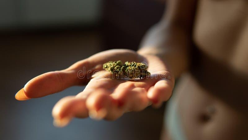 Germogli della marijuana in primo piano delle mani della donna fotografia stock