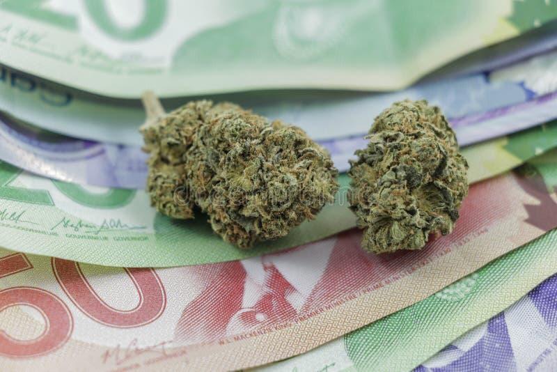 Germogli della marijuana su contanti canadesi immagine stock