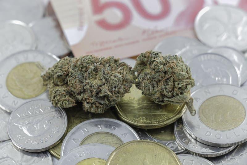 Germogli della marijuana su contanti e sulle monete canadesi fotografia stock