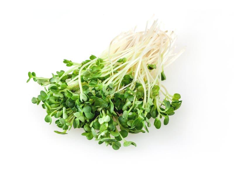 Germogli di alfalfa isolati su fondo bianco fotografie stock