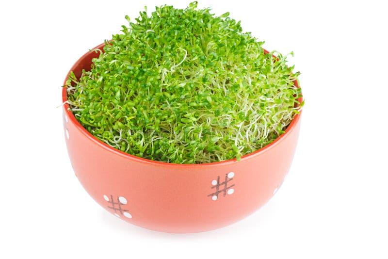 Germogli di alfalfa in una ciotola ceramica fotografia stock