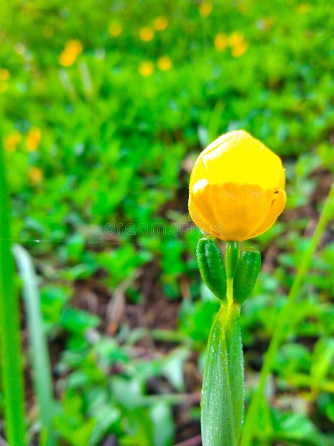 Germogli di fiore immagini stock libere da diritti