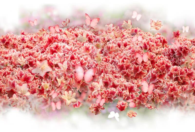 Germogli di fiore del rododendro con le farfalle fotografie stock libere da diritti